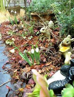 スノードロップの庭.JPG